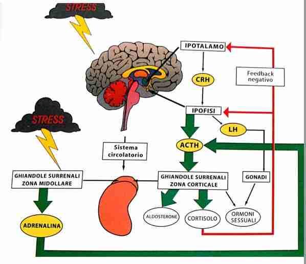 stress e cause di gastrite